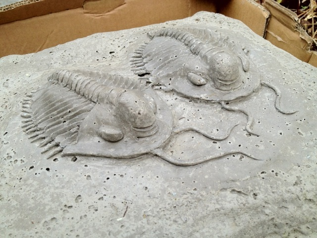 A pair of trilobites