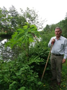 harvey plus hogweed